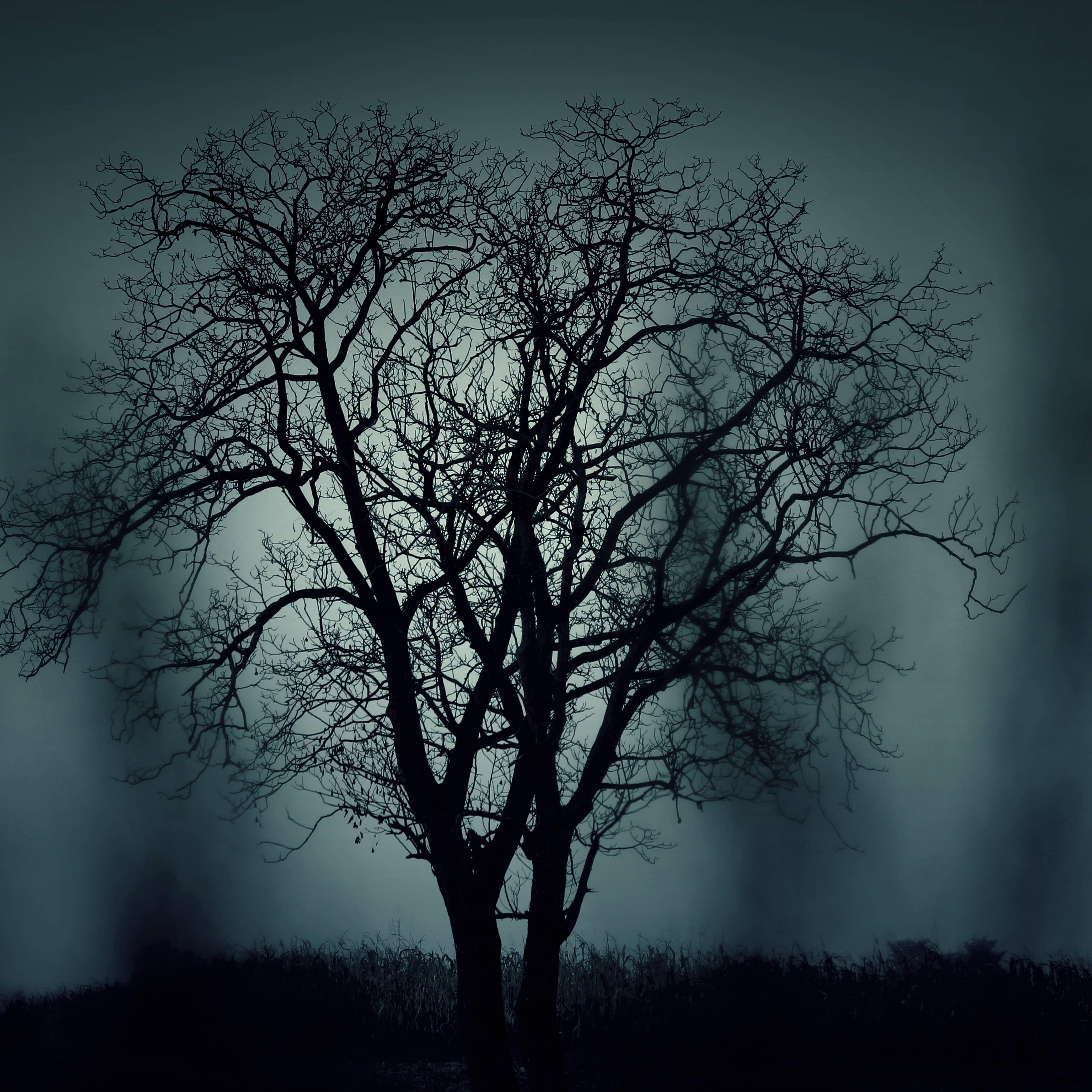 Arbre-sombre
