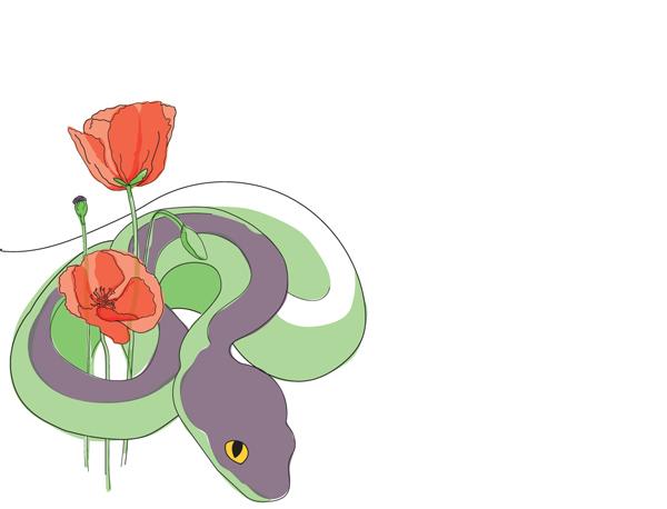 Illustration serpent et coquelicots