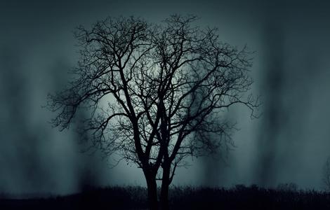 Un arbre dans l'obscurité