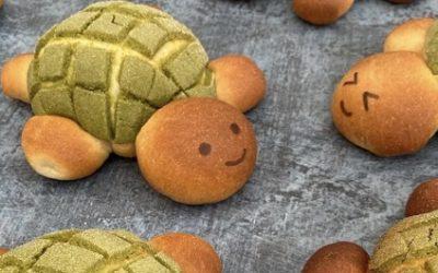 Melon pan tortues