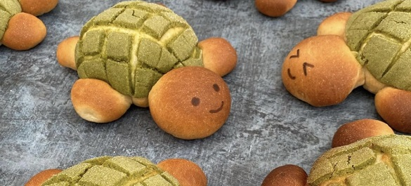 Melon pan tortues